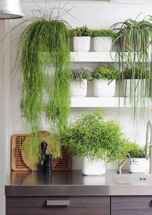 На кухне можно выращивать зелень и пряные травы