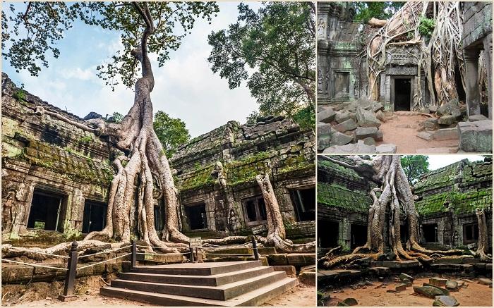 Та-Пром это современное название храма в Ангкоре, расположенного в провинции Сиемреап (Камбоджа). Храм был построен кхмерами в конце 12 начале 13 века.