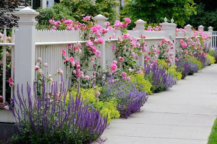 Ощущение покоя и тепла создают прекрасные цветы, которые растут около забота в сиреневом и розовом цветах.
