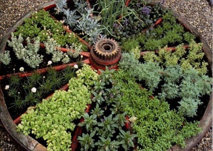 Отличный вариант посадить растения в колесо разбитом на сектора - это очень удобно и симпатично.