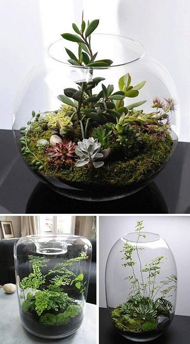 Крутой вариант создать мини-сад в вазе, что может быть лучше.