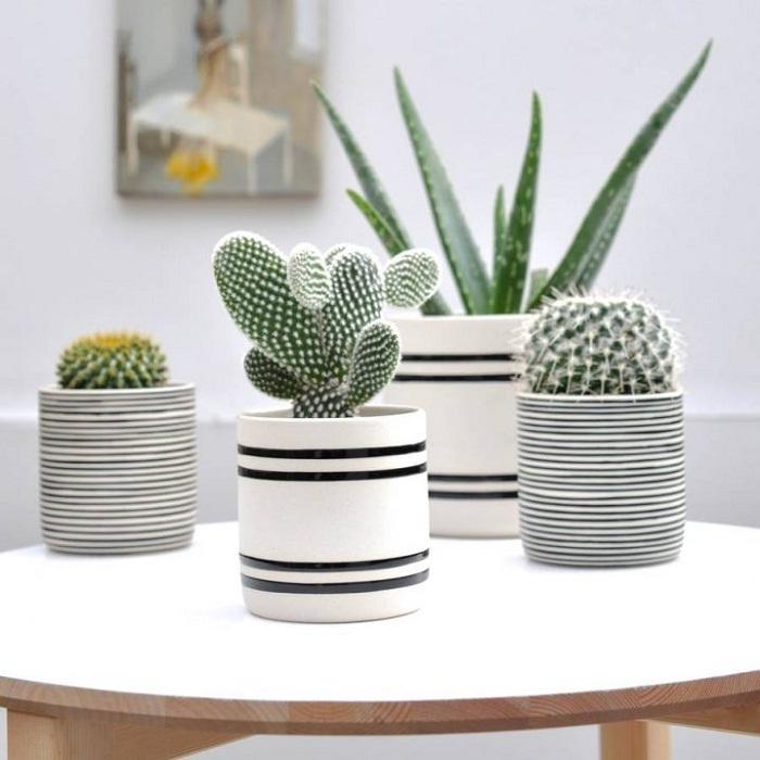 Мини-сад дома наполнит интерьер теплом и уютом, что станет просто отличным решением для любой из комнат.