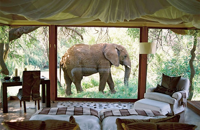 Незабываемый вид из окна номера в Южной Африке, вся природа просто на ладони.