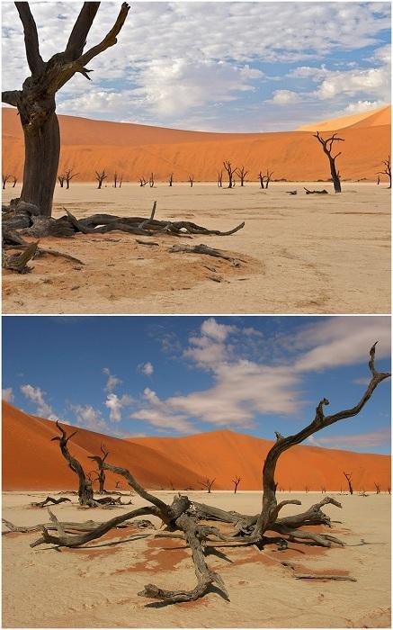 Лес Дедвлей, Намибия.