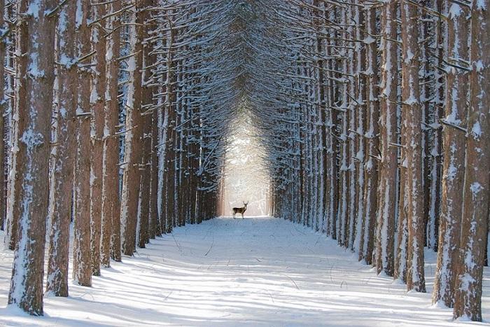 Лес Квебек, Канада.
