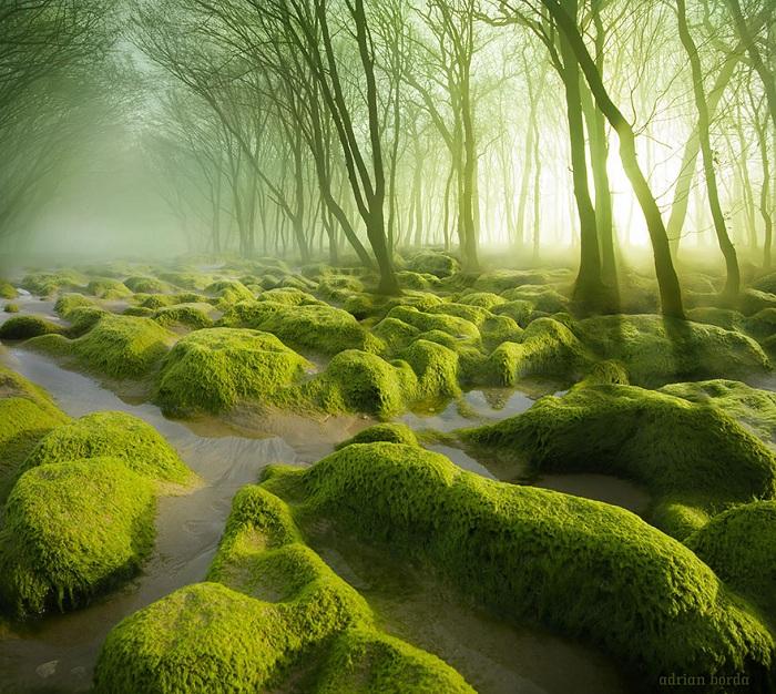 Болотистые леса, Румыния.