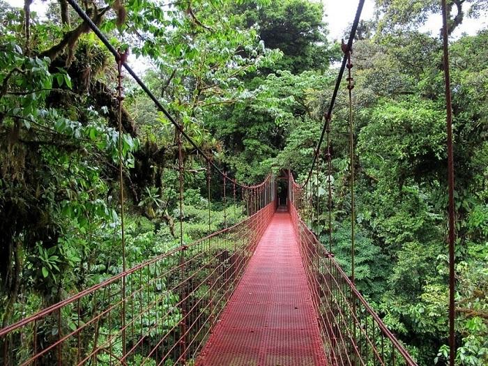 Национальный парк Монтеверде, Коста-Рика.