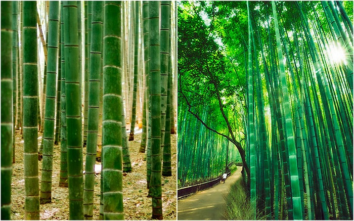 Бамбуковый лес, Киото.