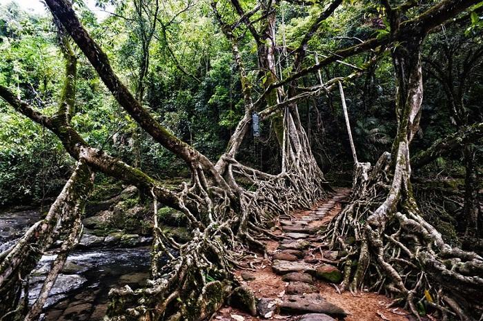 Субтропические Леса, Мегхалая.