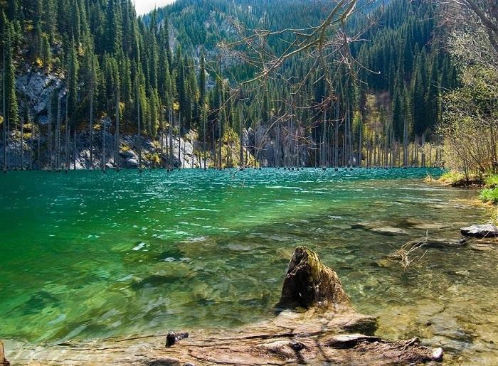 Затонувший лес озера Каинды, Казахстан.
