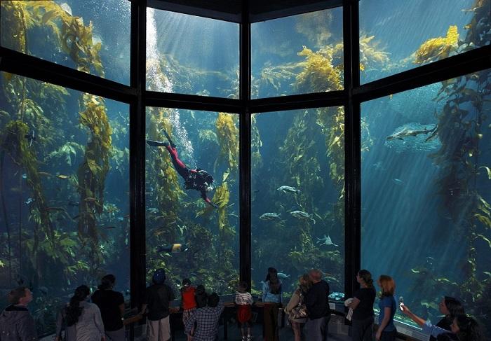 Аквариум залива Монтерей, США.