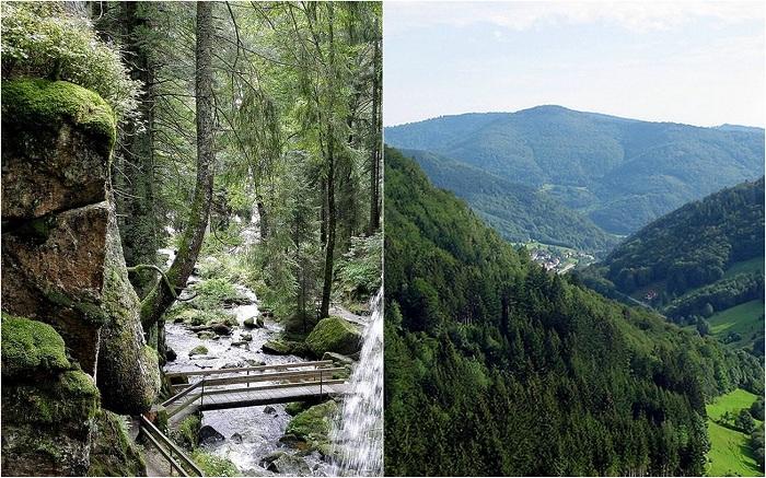 Шварцвальд или «черный лес», Германия.