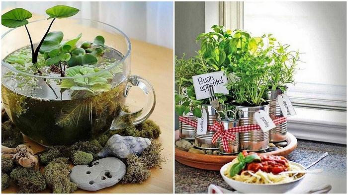 Примеры прекрасных мини-садов в домашних условиях.