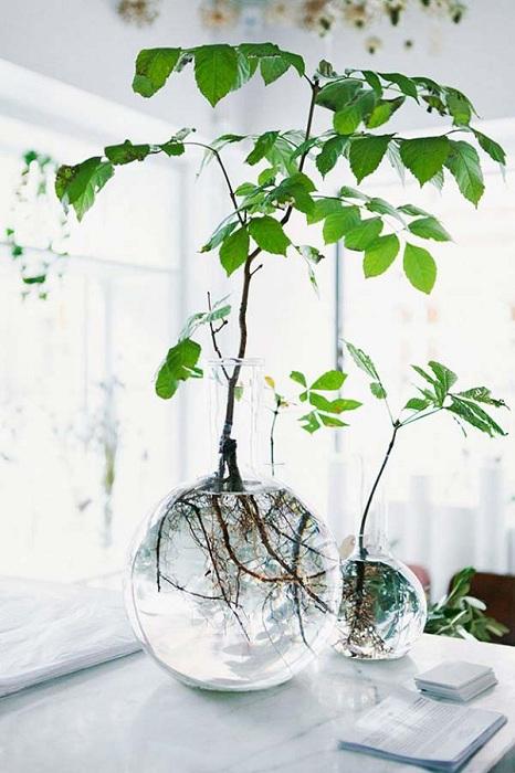 Симпатичный и интересный вариант оформления домашнего мини-сада в прозрачных круглых вазах с кристально чистой водой.