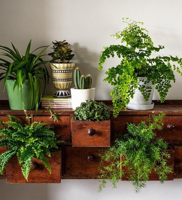 Хороший и креативный вариант оформления мини-сада в мини-комоде, который украсит любую комнату.