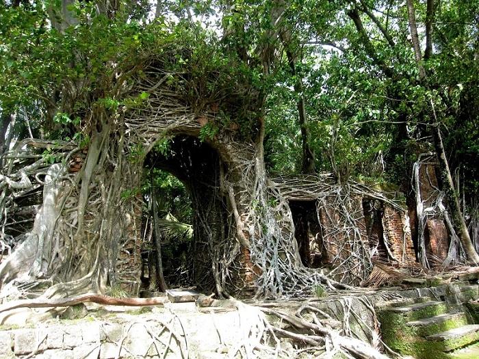 Остров когда-то был административным центом индийской колонии-поселения. Когда его бросили люди, он зарос практически весь Фикусом.