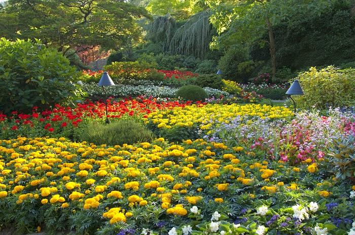 Огромная территория и множество посетителей каждый год - этот ботанический сад основали Роберт Пим Бутчарт и его жена Дженни.