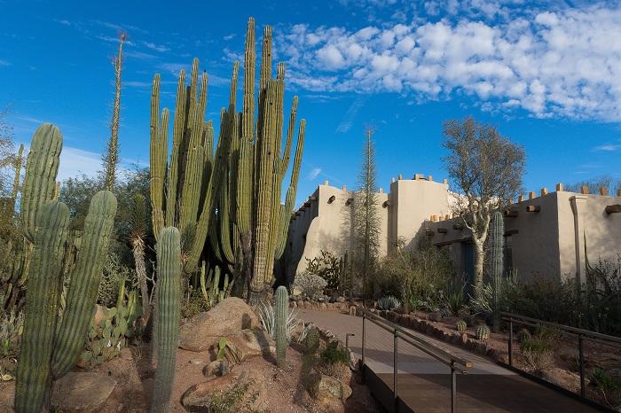 Прекрасный ботанический сад расположен в парке Феникса, в нем представлено более 50 000 растений, включая кактусы, агавы и других растений.