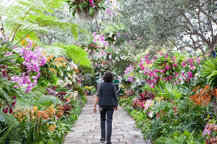 Ботанический оазис в Бронксе основан в 1891 году, площадью в 250-акров с количеством растений более одного миллиона.
