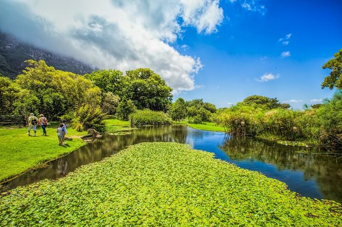 Потрясающий сад создан для сохранения растений в Южной Африке, это необычное место, которое просто стоит посетить.
