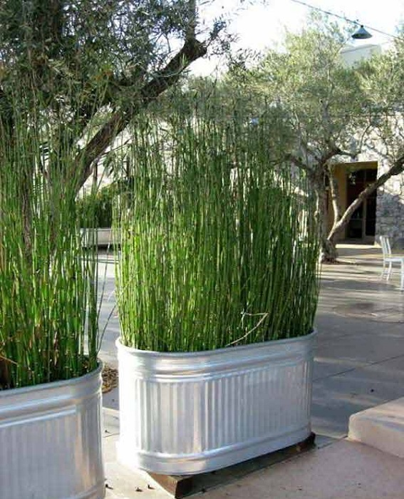 Симпатичный огромный кашпо размещен в оцинкованном ведре, то что станет отличным элементом оформления двора.
