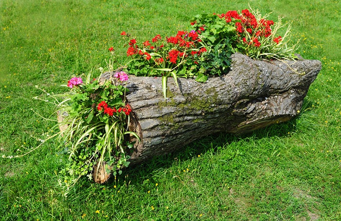 Бревно возможно использовать как горшок для цветов, что станет простым, но оригинальным украшением для сада.