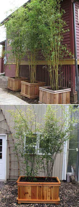 Бамбуковые насаждение во дворе создадут свое настроение и определенную обстановку.