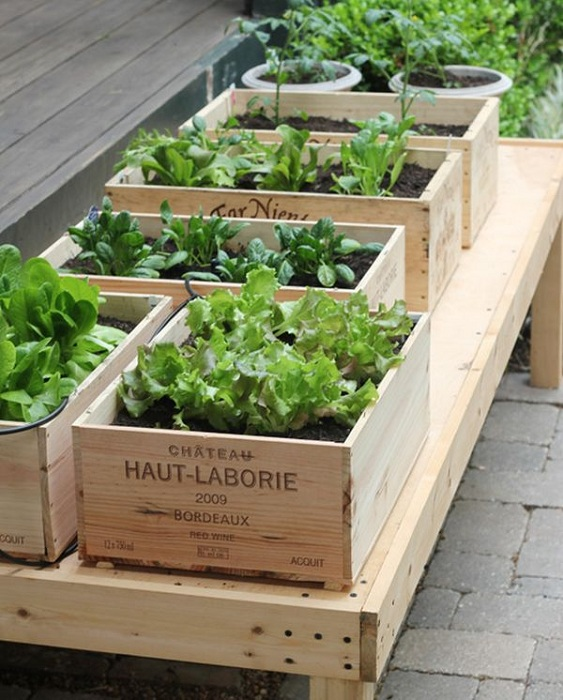 Прекрасный вариант использовать коробки для вина в целях создания места для посадки овощей и фруктов.