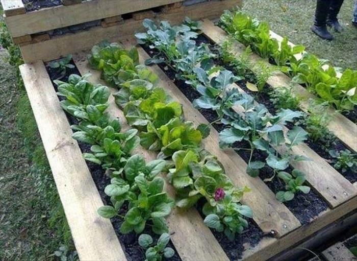 Отличный вариант для создания поддона-плантации для удобного расположения растений на огороде.
