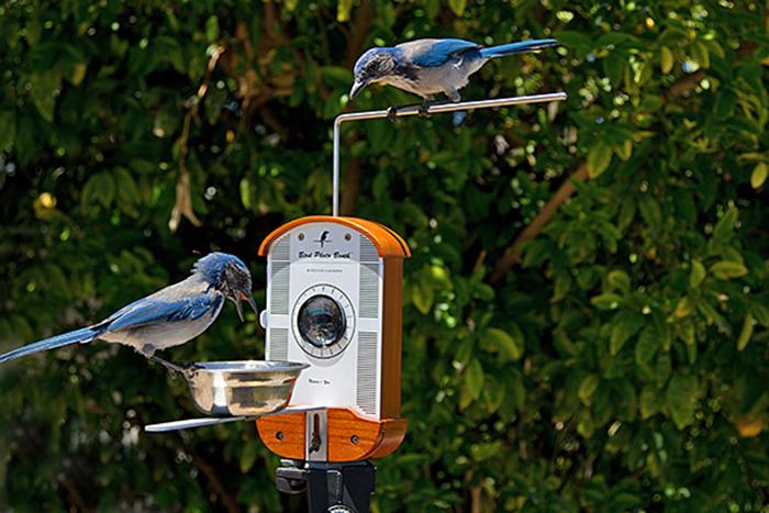 Симпатичная кормушка для птиц с возможностью фотографирования на смартфон и фотоаппарат.