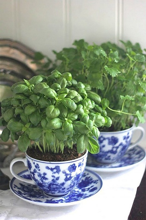 Если дома есть ненужная посуда, то её возможно использовать для того чтобы создать мини-сад.