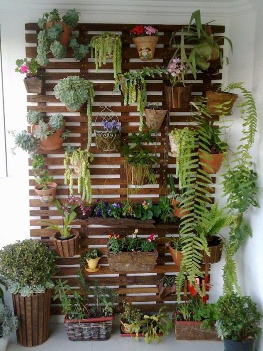 Крутой мини-сад в комнате создан при помощи размещения его на стене, что сэкономит пространство.