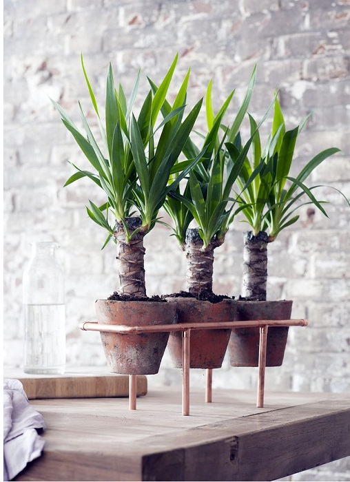 Удобный и удачный вариант трансформировать комнату и декорировать её с помощью горшков для цветов в горошек.