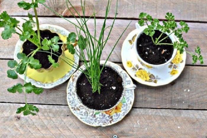 Один из самых лучших вариантов создания горшочков для цветов из обычных чашек и блюдец.