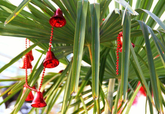Вместо традиционной ёлки подойдёт пальма