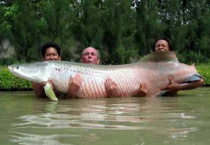 Рыба Пиракури