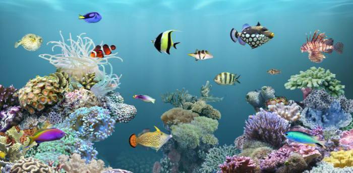 Виртуальный аквариум