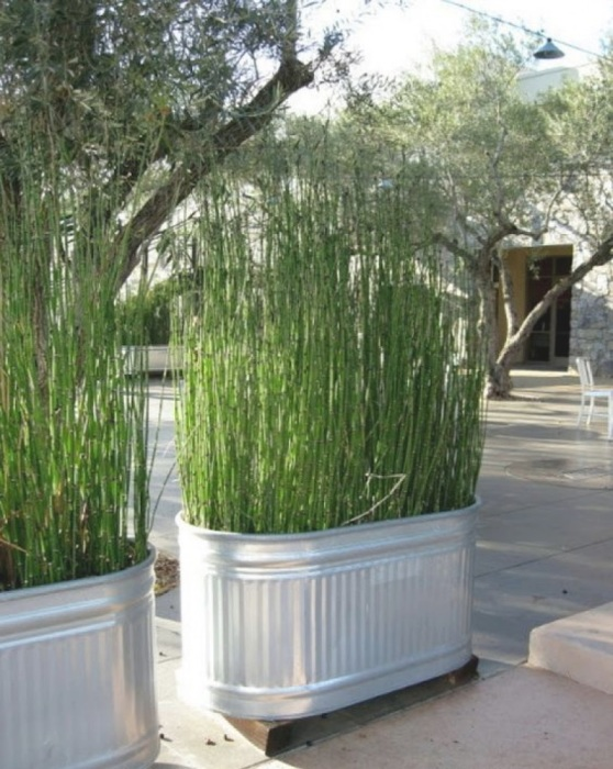 Большие кашпо с высокими растениями могут служить отличной перегородкой на дачном участке.