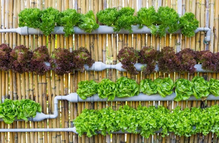 Восхитительных идеи создания вертикального озеленения для украшения дома и садового участка.