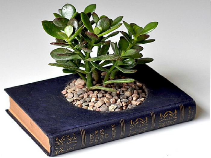 Даже старую книгу можно превратить в оригинальный кашпо для небольших растений.