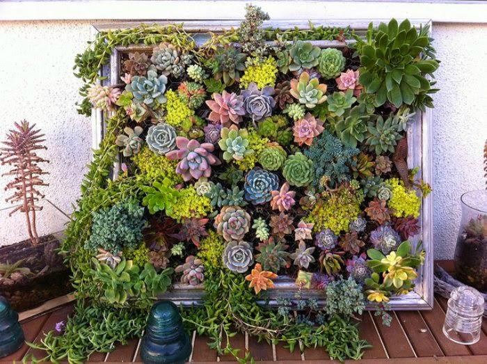 Небольшие комнатные растения можно посадить в старую рамку для картины и украсить ею стену.