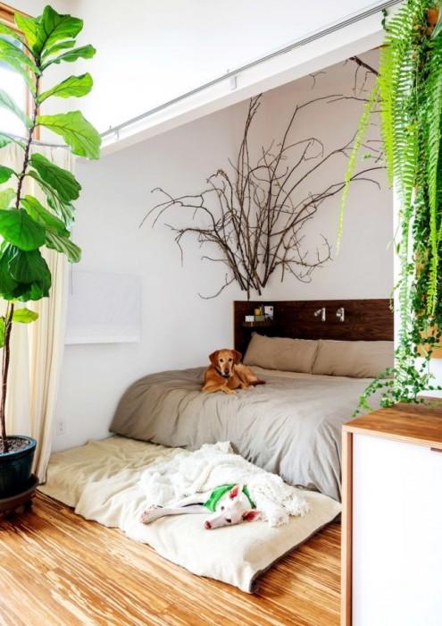 Некоторые виды комнатных растений будут особенно благоприятными для спальной комнаты.
