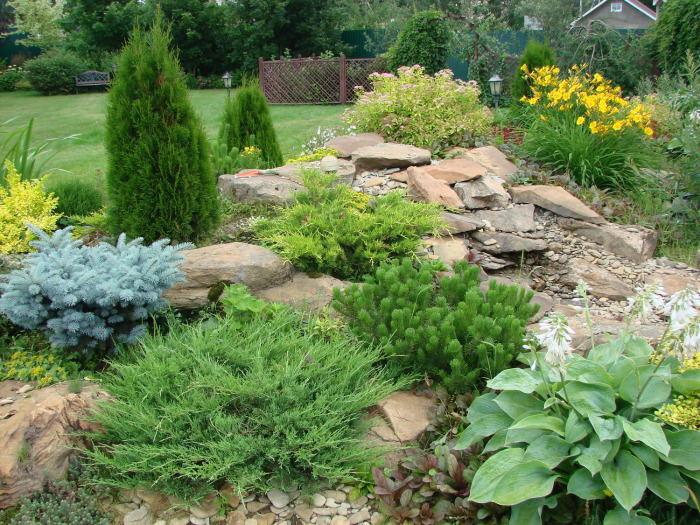Рокарий с густой и разнообразной растительностью между камнями.