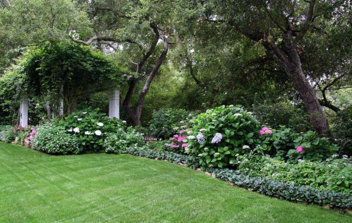 Удивительное сочетание однолетних и многолетних растений в саду.
