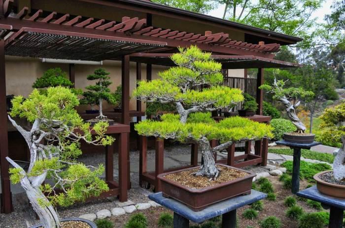 Декоративный бонсай, который станет настоящим украшением и придаст саду красоту и гармонию.