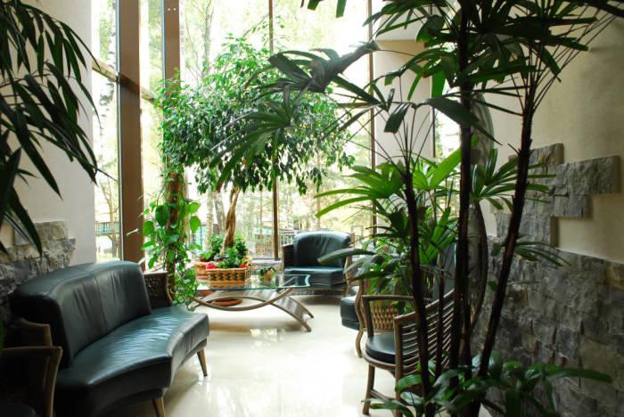 Декоративные растения вызывают приятное эстетико-психическое воздействие.