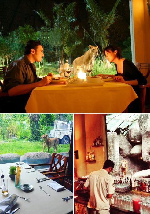 Для любителей адреналина подойдет ужин в компании львов. Индонезия, Бали.