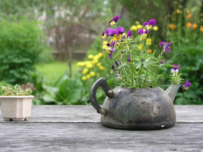 Старый чайник, который легко можно превратить в оригинальное кашпо для комнатных растений.