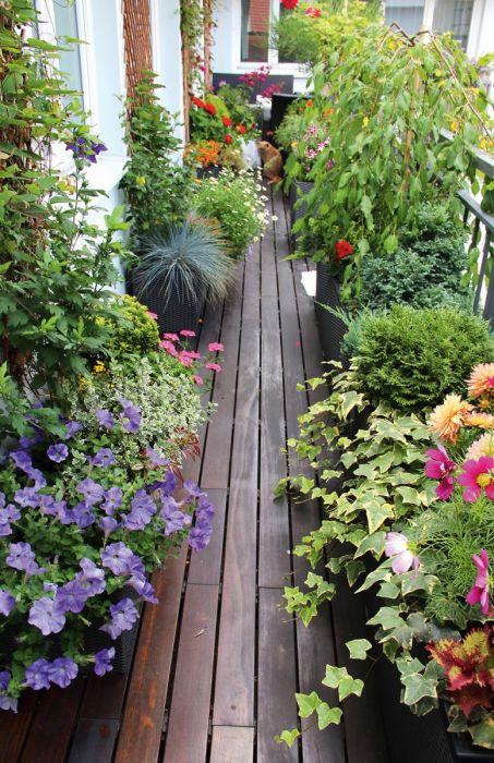 Компактный сад можно разместить даже на небольшой площади.