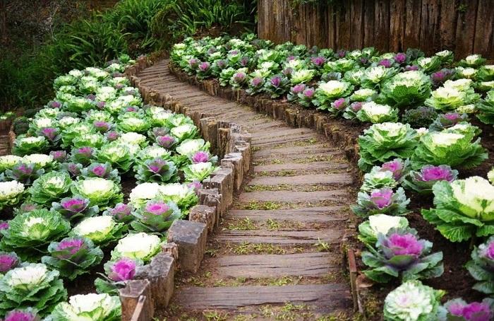 Крутые примеры оформления садового участка своими руками.